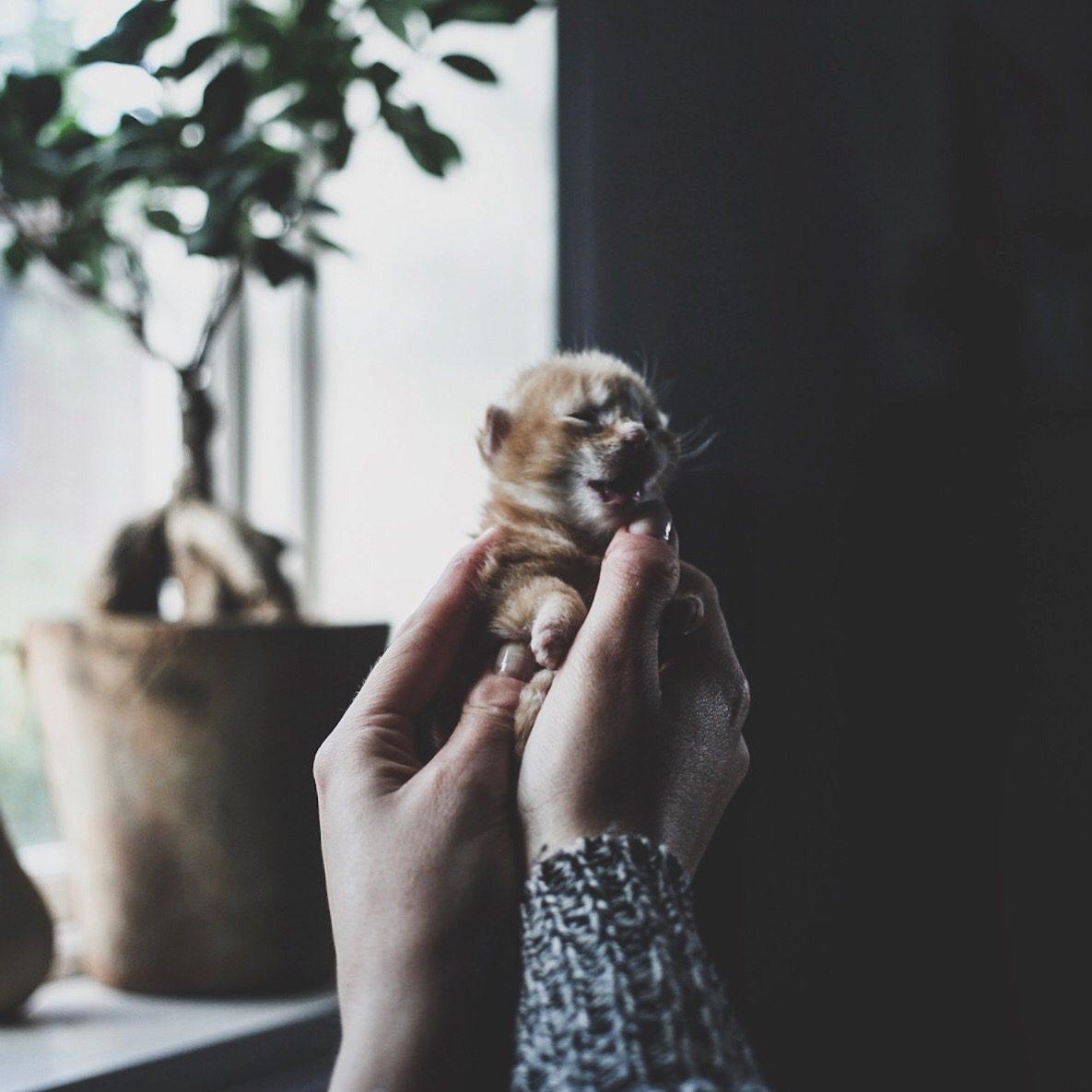 lovely life kattungar