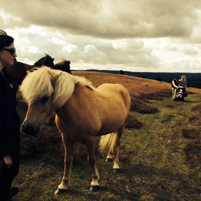 horse.emma
