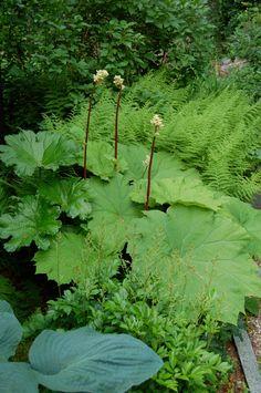 green.garden.alunrot.2701016