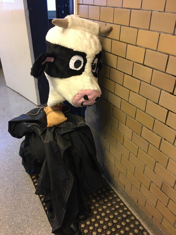 oatly.cow.1