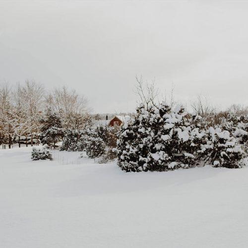 Hej från vinterland