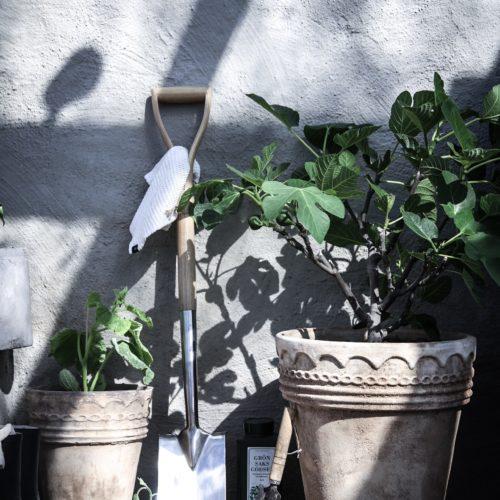 Trädgårdsplaner och odlingslängtan