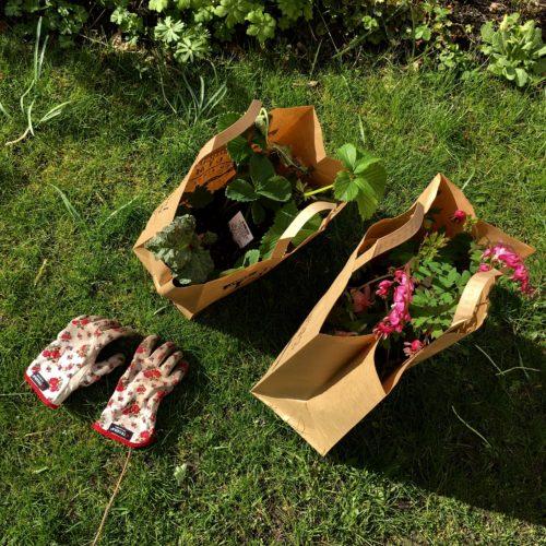 trädgårdsdax