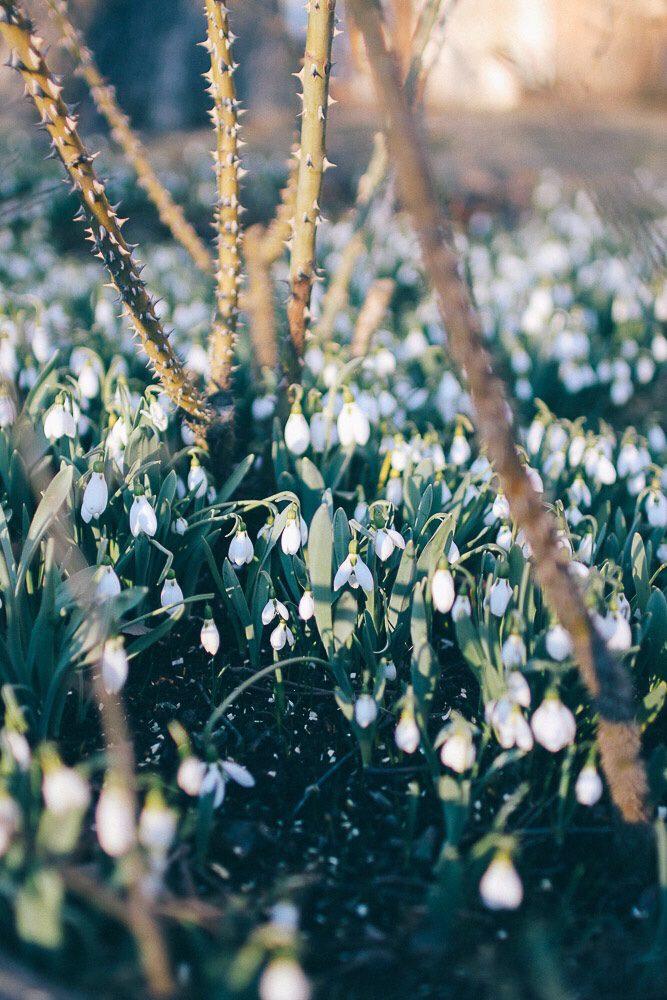 Vårtecken och glad påsk