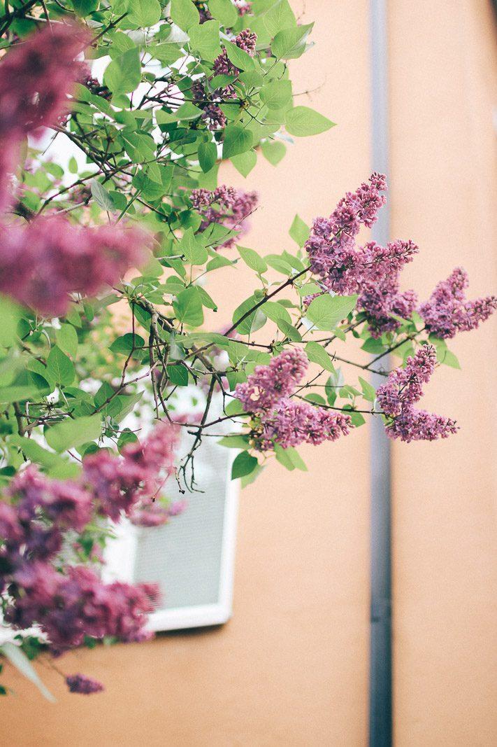 Våren på Kungsholmen