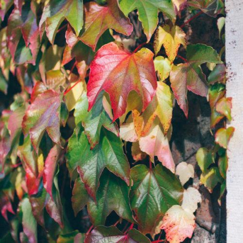 Kungsholmen på hösten