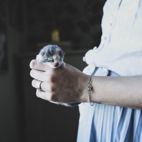 Kattungar och gravidhormoner