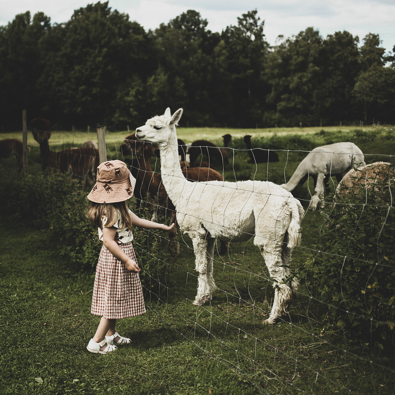 lovely life utflyktstips alpackor