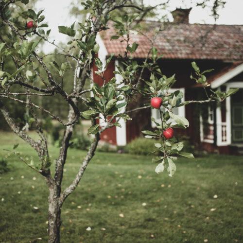 Älskade Södermanland – Torpliv för en vecka