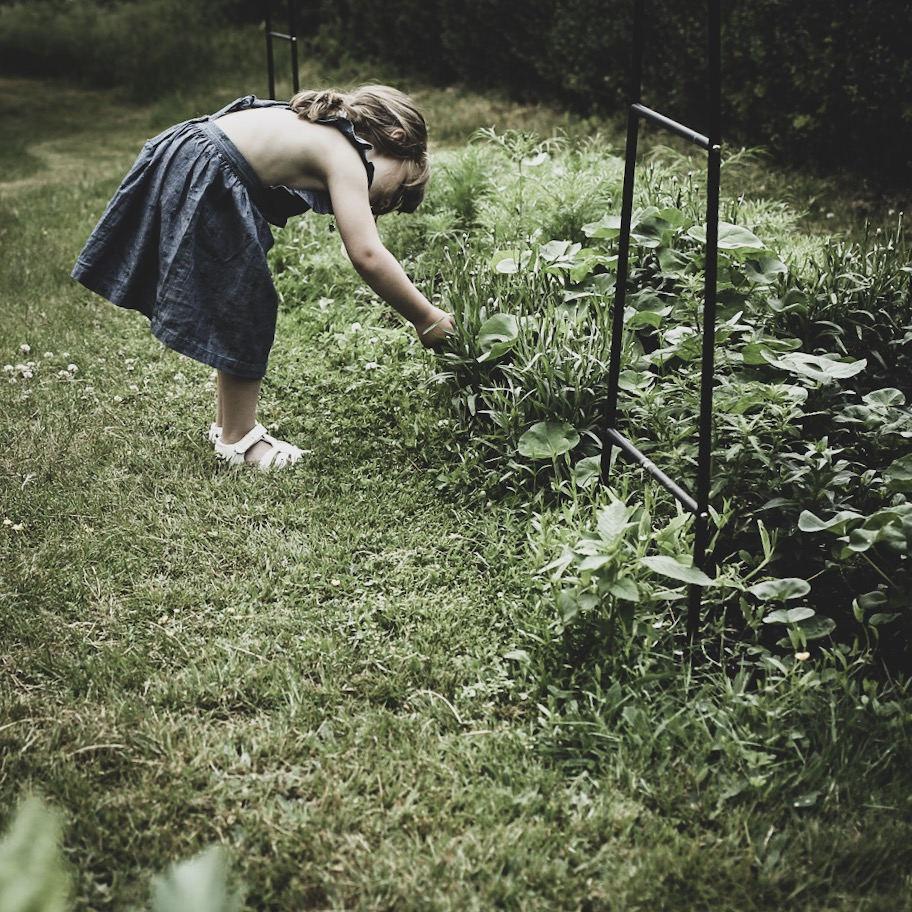 Lovely life trädgård snittblomsodling