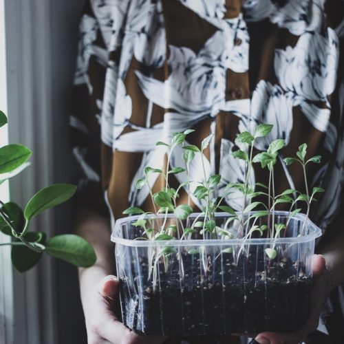 Dags att odla!