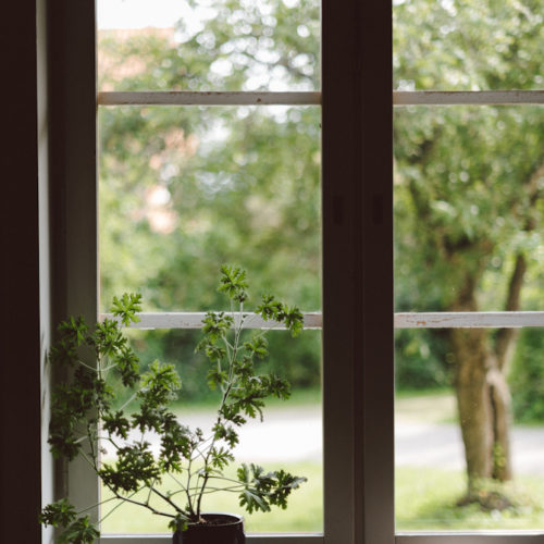 Doftpelargon och stenar i fönstret