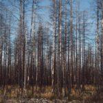 Hälleskogsbrännan by Babes in Boyland
