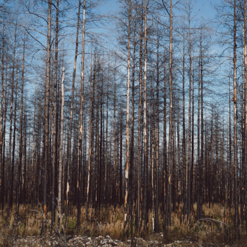 Hälleskogsbrännan