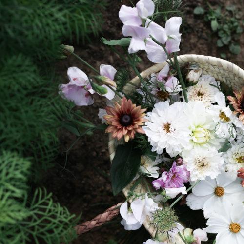 Allt om hur man odlar sina egna blommor