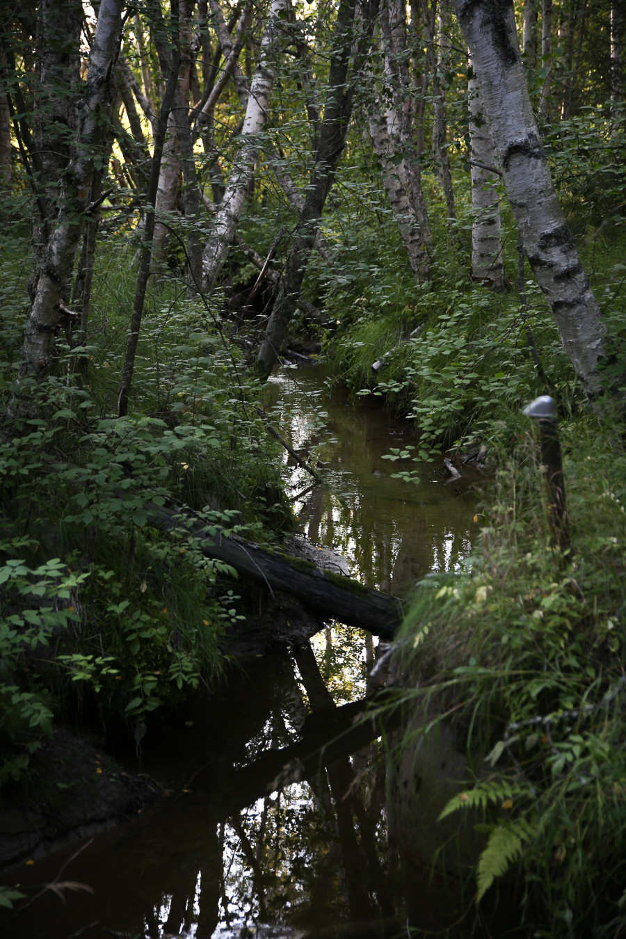viktoria.holmgren.lovely.life.skogen.back