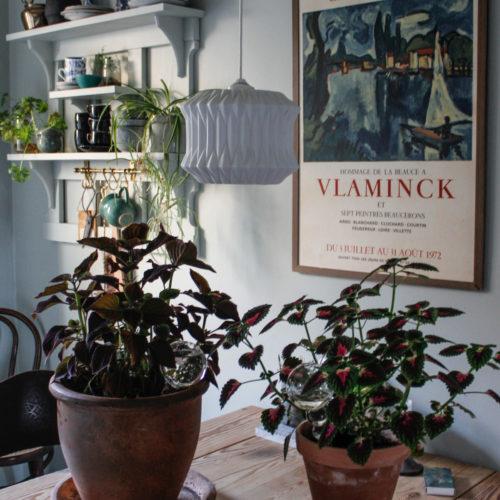 Inspiration i köket och växtligheten hos mig.