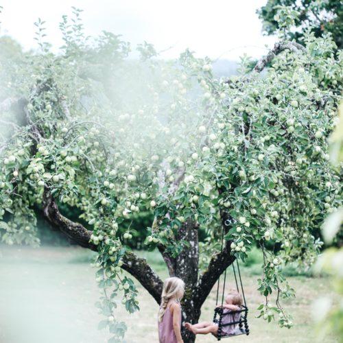 Bland äpplen