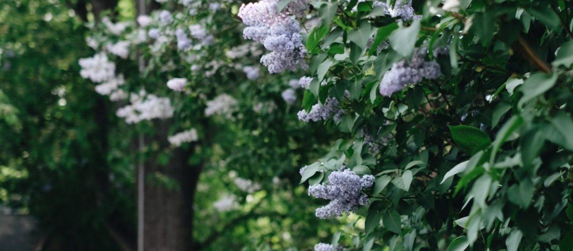 emma trädgård 5