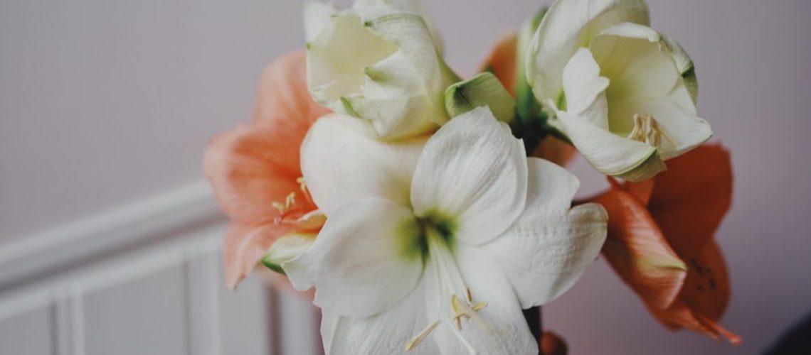 Whatdecoratesmyday amaryllis 1
