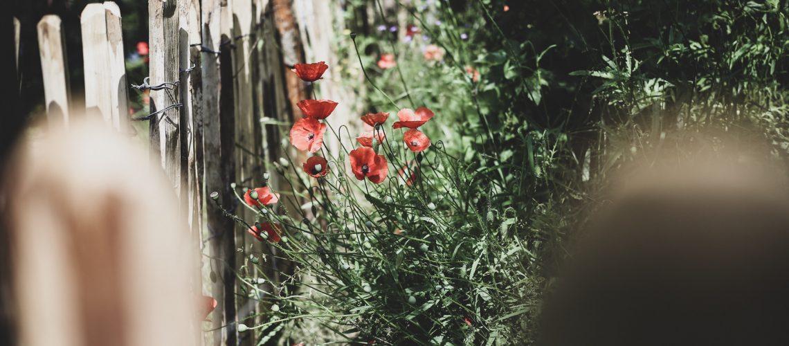 Lovely life mandelmans trädgårdar