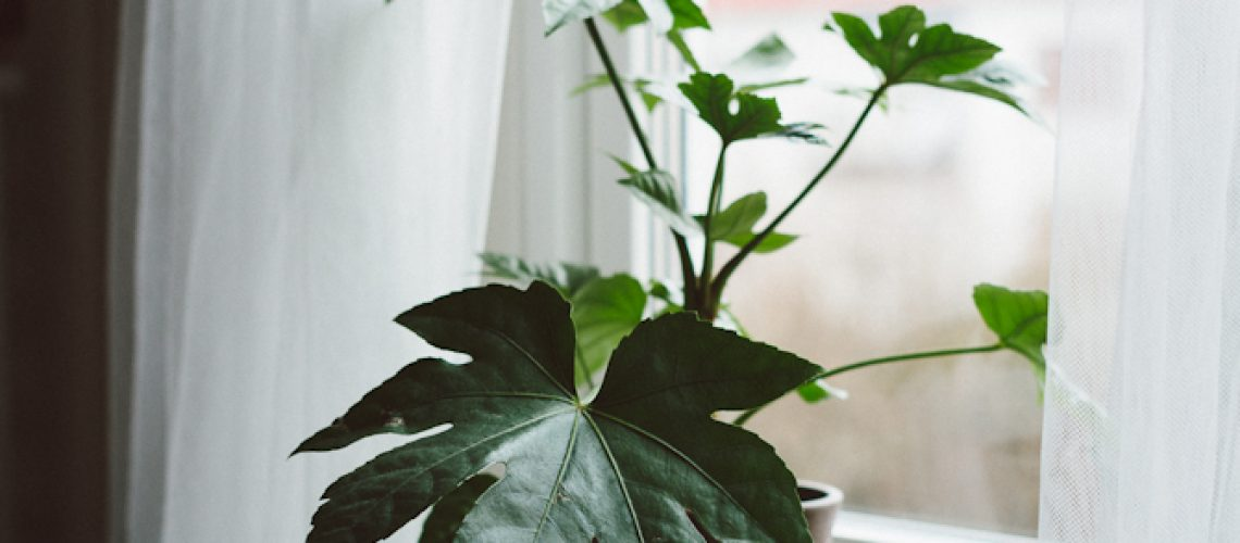 Plant by Babes in Boyland