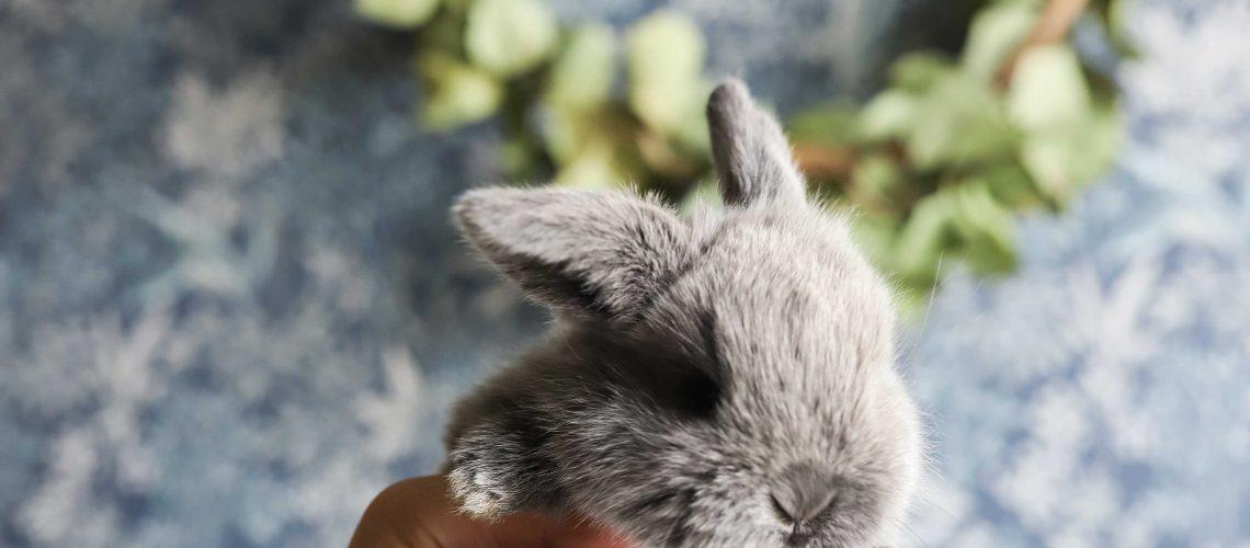 Kaniner-5