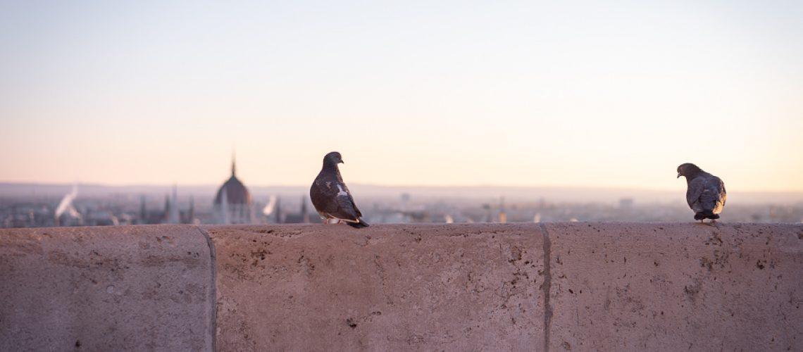 Katrin Baath_ Budapest-01614