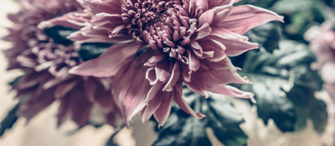 Katrin_Baath_Lovely_life_Blommor-2-29