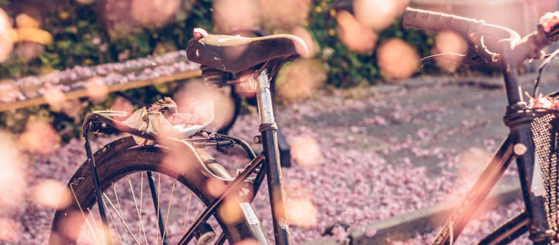 Katrin_Baath_Lovely_life_cherryblossom-00500