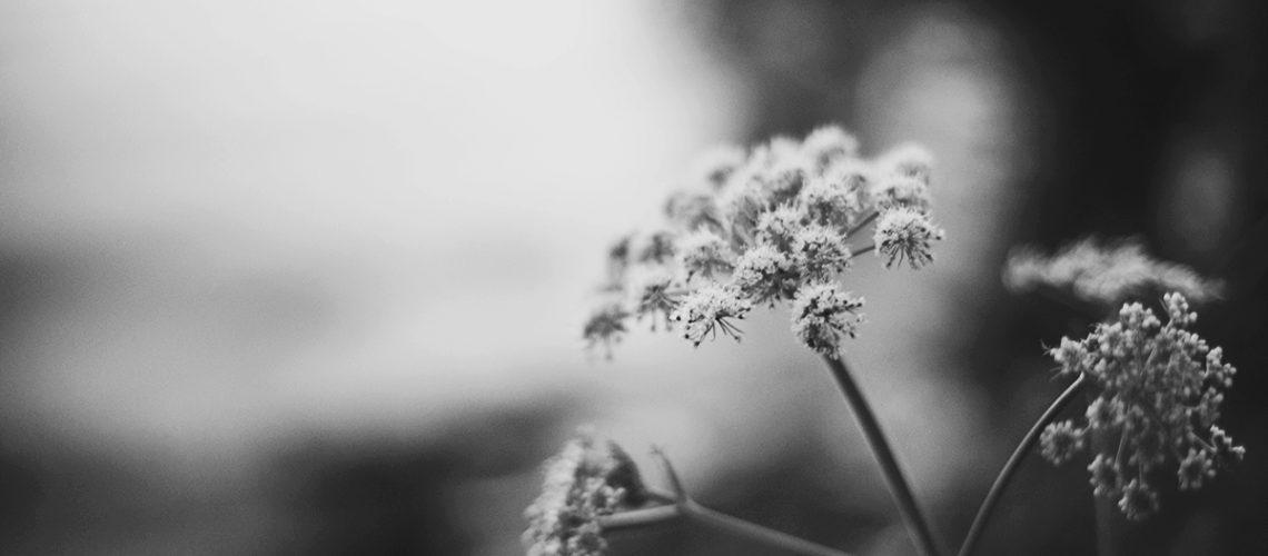 Summer copyright 2016 Anna Malmberg 1