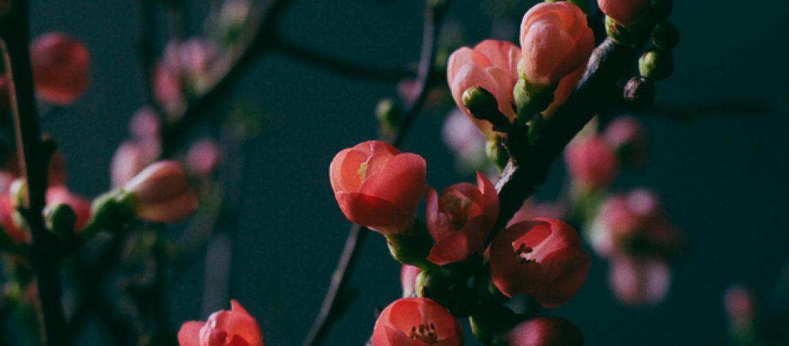 Skillad florals (2 av 6)