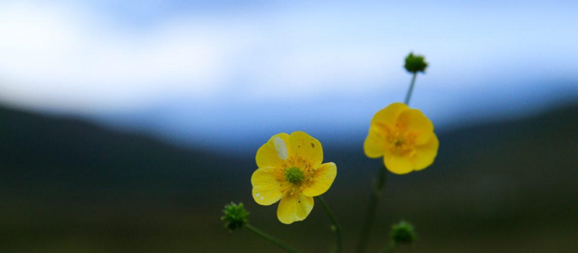 Skillad florals (3 av 22)