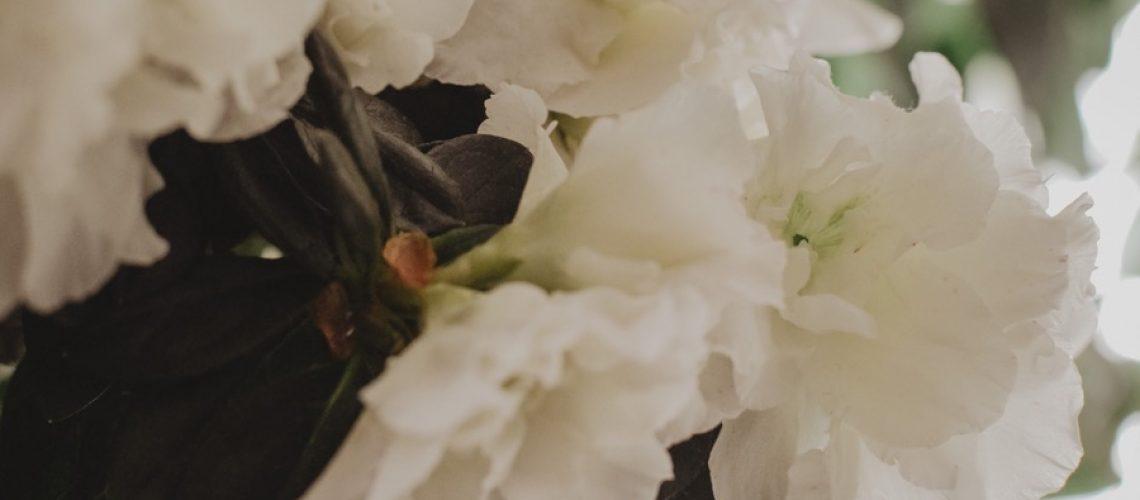 azalea01