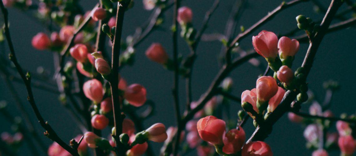 rosenkvitten skillad florals