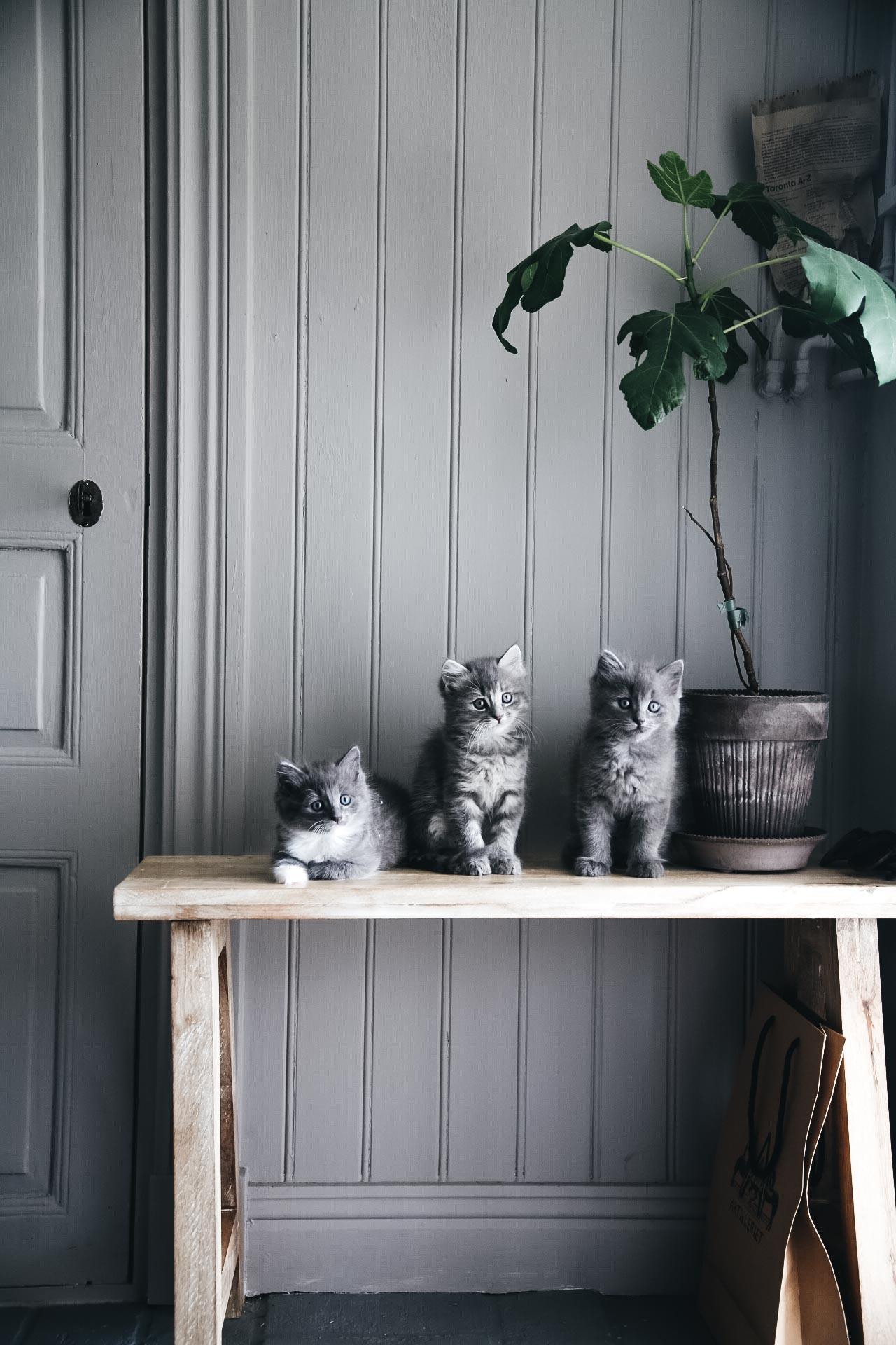 Pioner, kattungar, fikon och favoritbilder