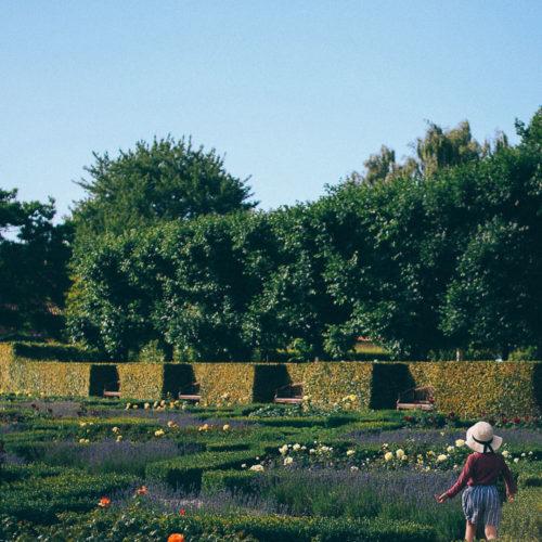 Resan till Köpenhamn dag 1, med besök i en rosenträdgård och middag på en takterass
