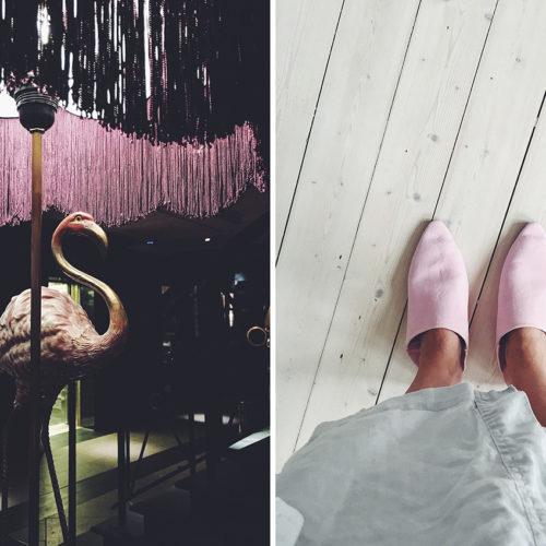Flamingos och septemberljus