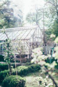Trädgårdsfrossa
