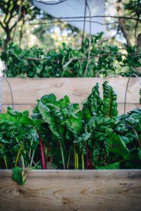 Hej från grönsakslandet och middag på Cantinan