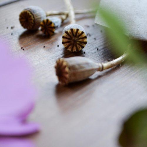 Trädgårdsdag och fröpåse-DIY.