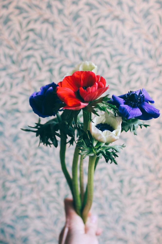 anemon blomma och tapet pilbad william morris