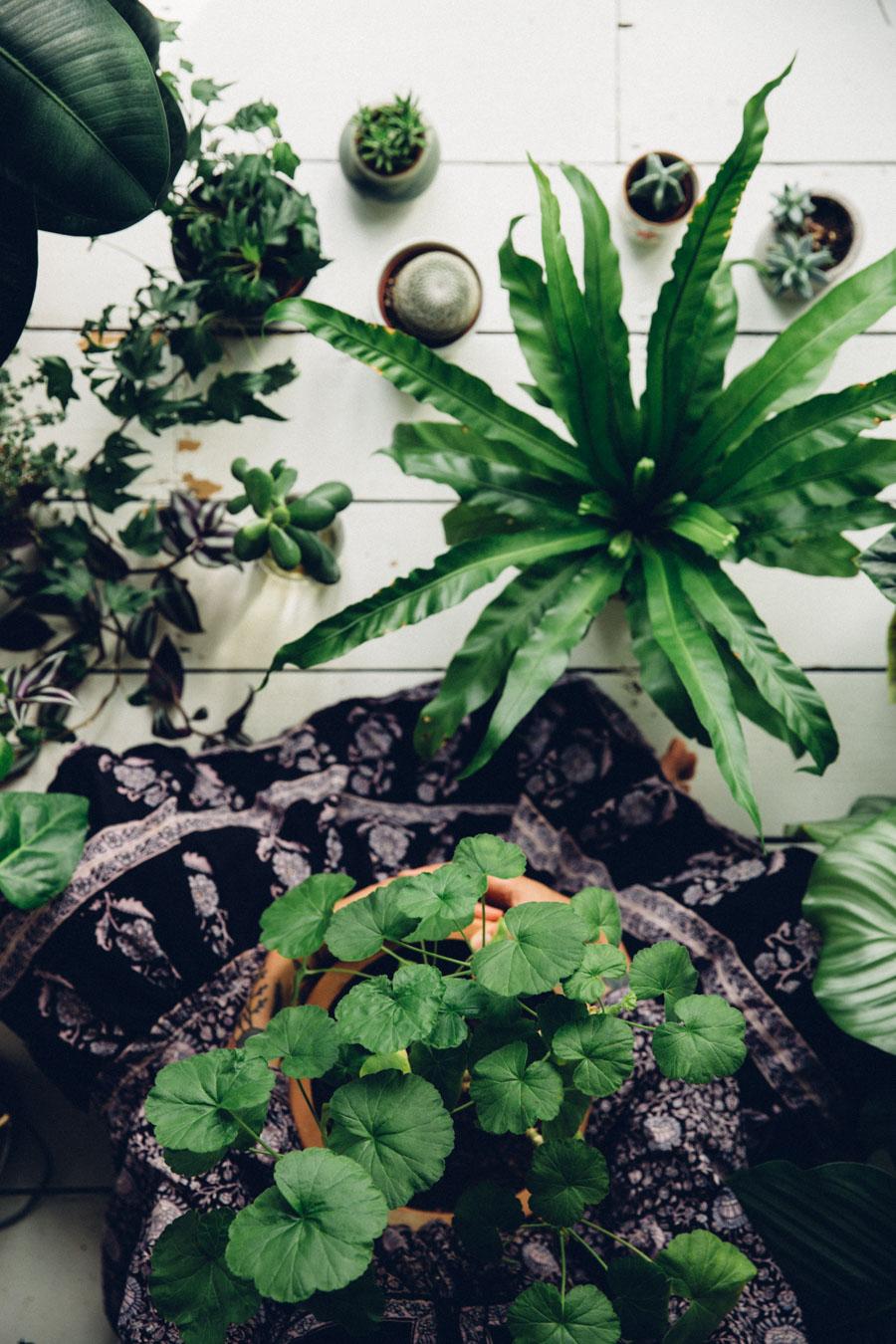 Plantselfie-3