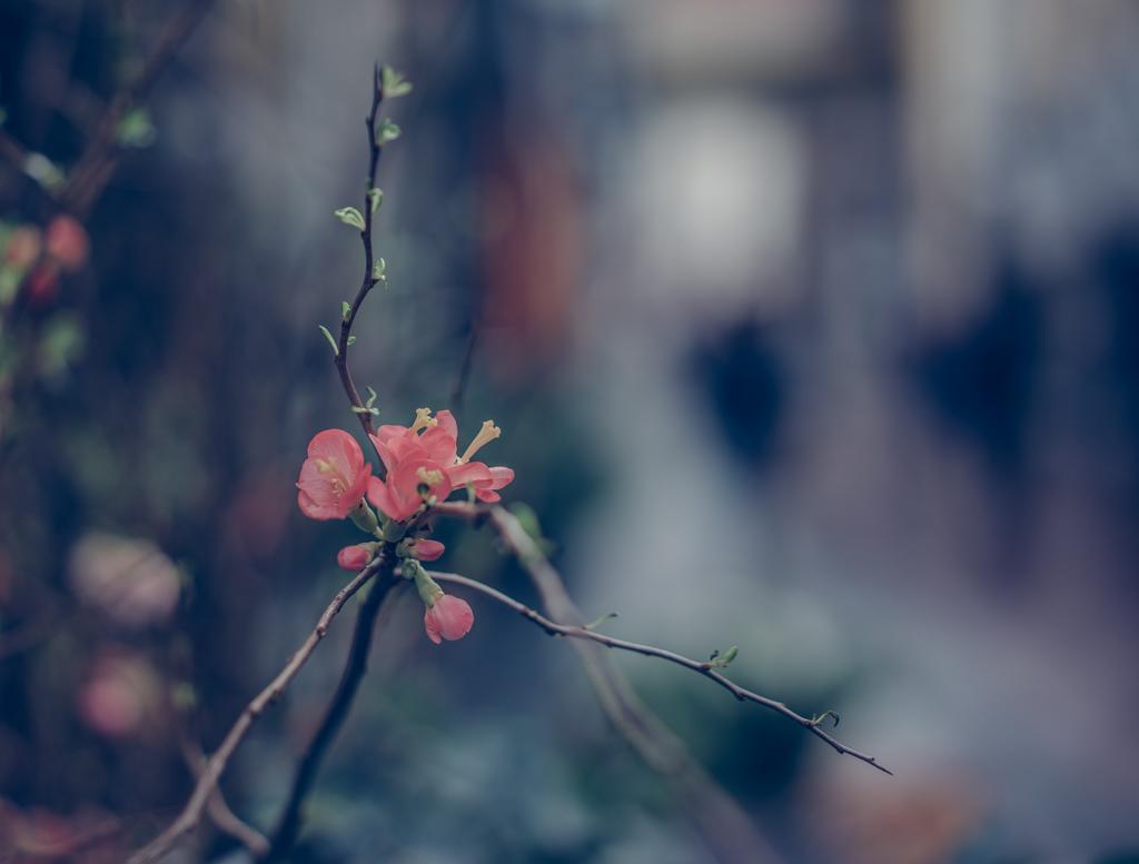 katrin_baath_lovelylife-00822
