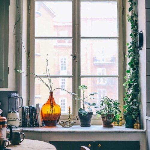 Tips på klängväxter som förgyller hemma och håller länge