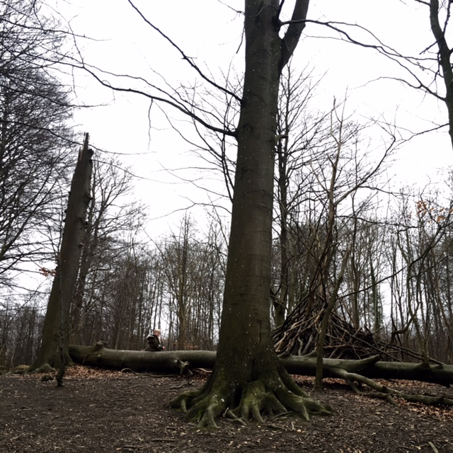 skog13161