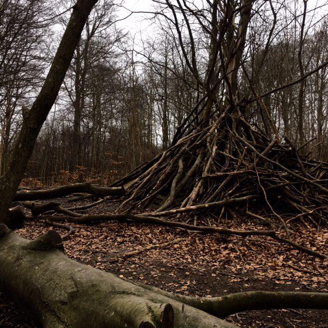 skog13162