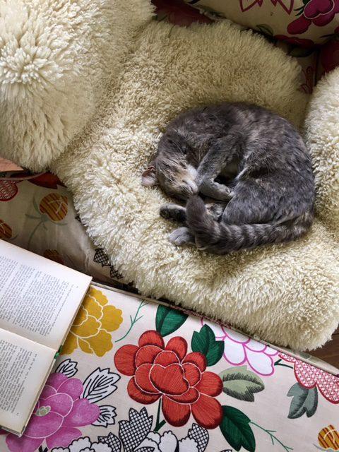 cat3817