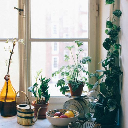 Om längtan efter grönt och en ny silverranka i mitt kök