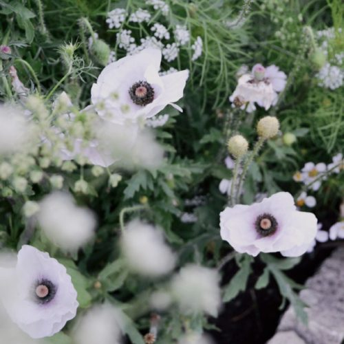 Checkar av blomlistan